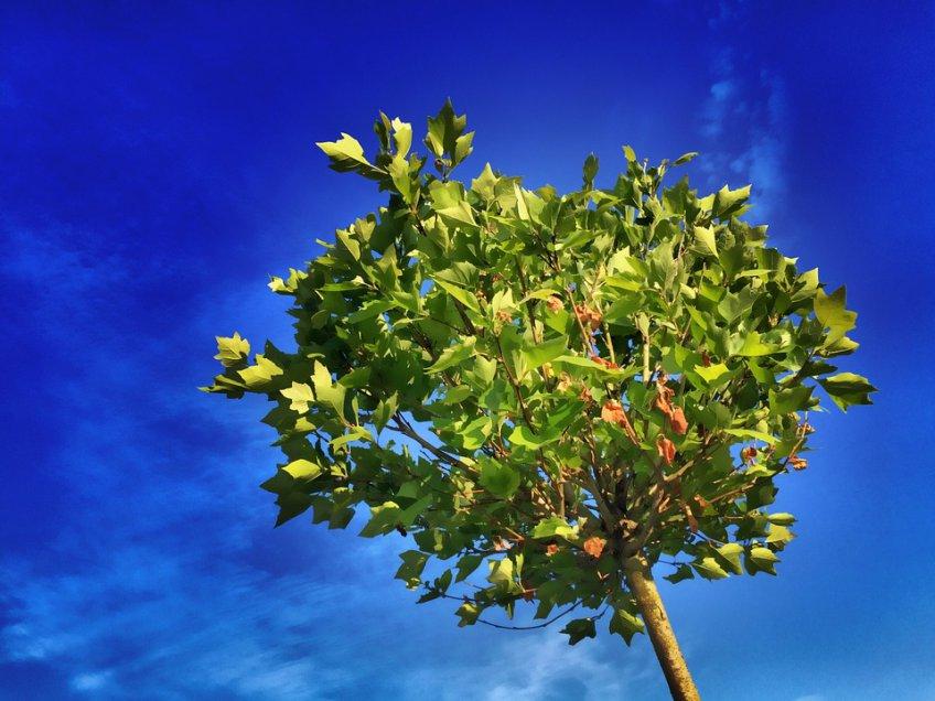 Весной врамках акции «Миллион деревьев» в российской столице озеленят 875 дворов