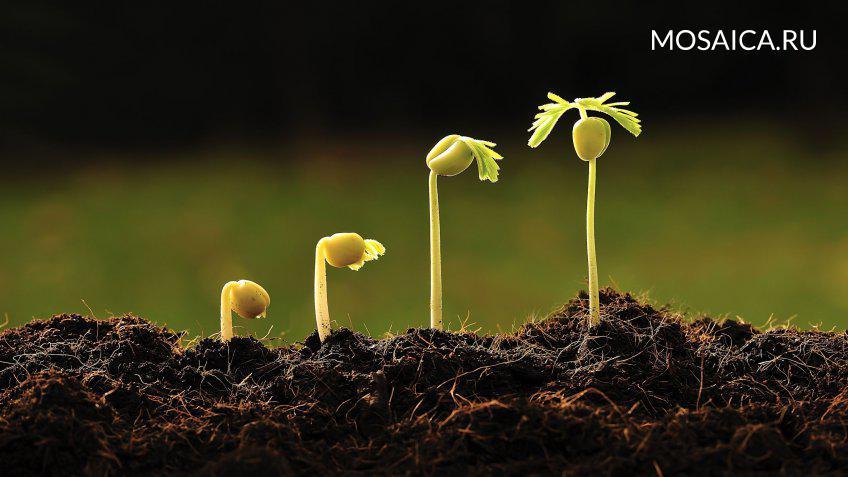 Наночастицы, ускоряющие рост растений, создали красноярские ученые