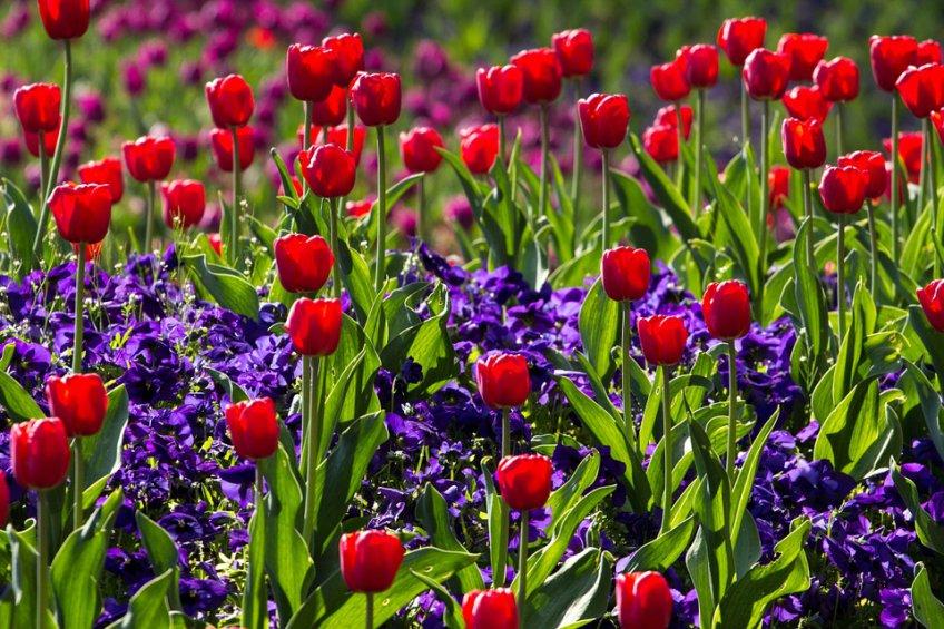 Столицу России украсят 17,5 млн цветов и торжественное освещение