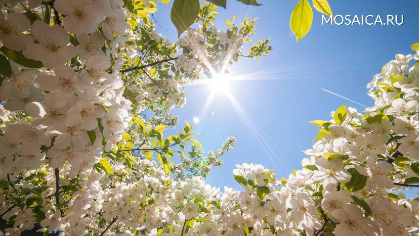 Нет худа без добра: холодный май назвали предвестником хорошего урожая