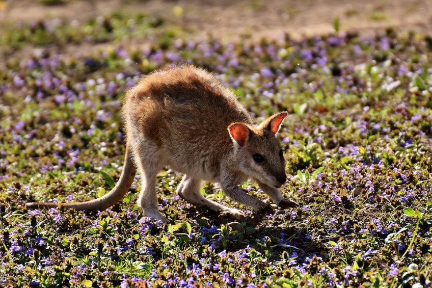 Зоозащитники обнаружили вПодмосковье помещение смини-кенгуру ибелым дикобразом