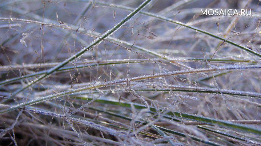 ВТульской области ожидаются заморозки