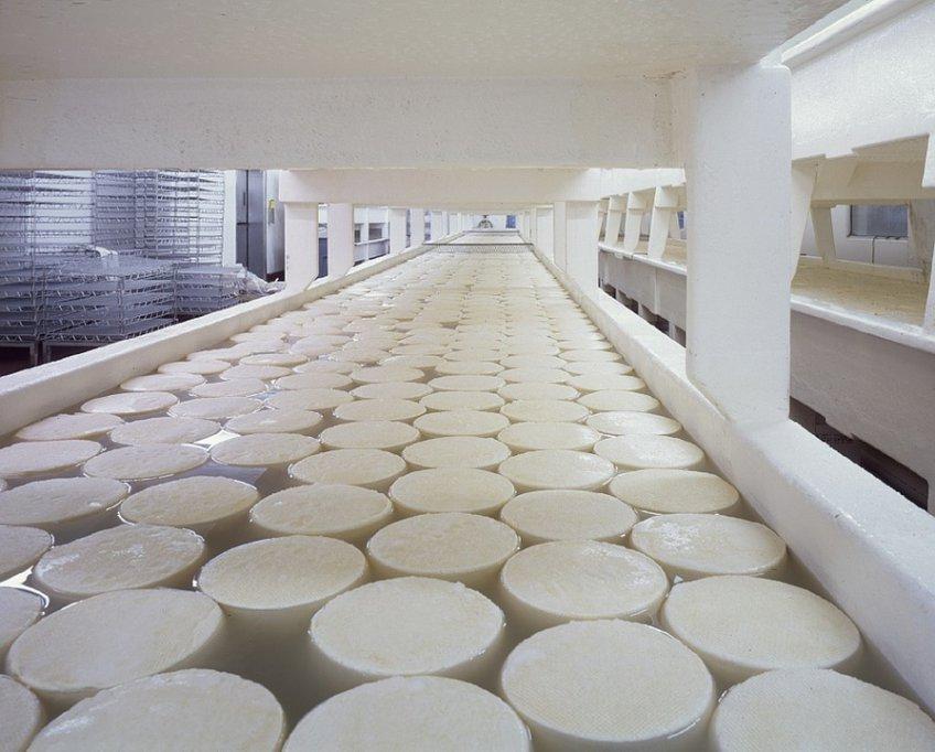 Мощность переработки молока при производстве сыра вПодмосковье составила 11 тыс тонн