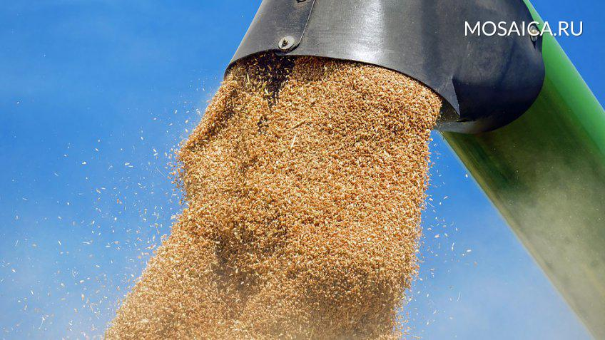 Российская Федерация наращивает экспорт пшеницы на глобальный рынок