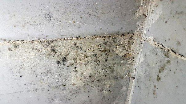 Вдетской инфекционной клинике Ульяновска работники органов отыскали насекомых иплесень