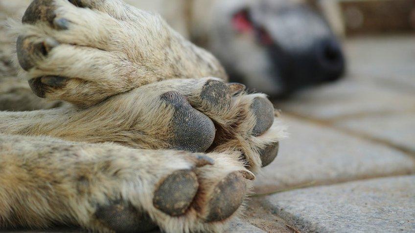 ВПодмосковье планируют ввести штрафы занезаконное усыпление бездомных животных