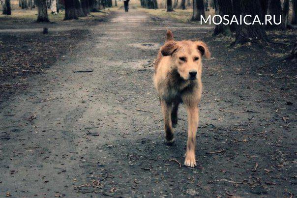 Родители девушки, покусанной собакой, отсудили ухозяйки животного 50 000 руб.
