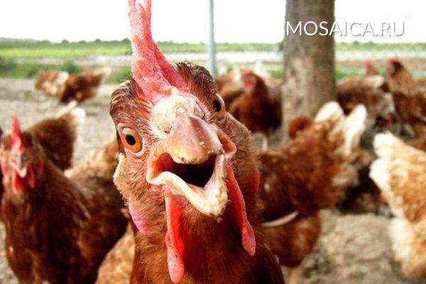 Директора «Симбирской птицефабрики» подозревают вналоговом правонарушении
