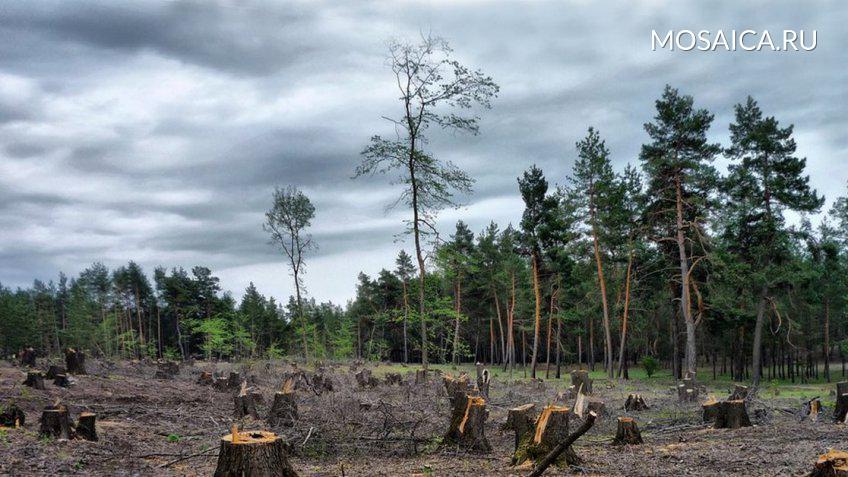 Чиновников изМинсельлесхоза обвиняют вфальсификации документов опродаже лесных участков