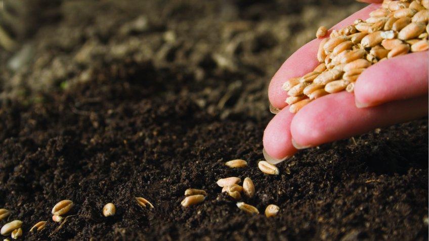 Ткачев: Аграриям врегионы ушли 136млрдруб. субсидий