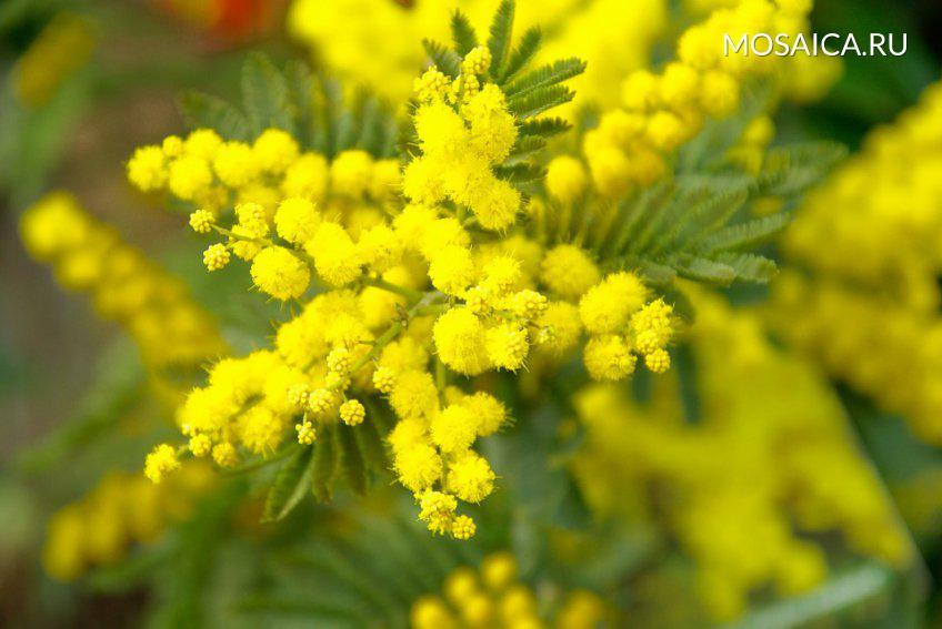 Цветы неподорожают вБарнауле к8марта
