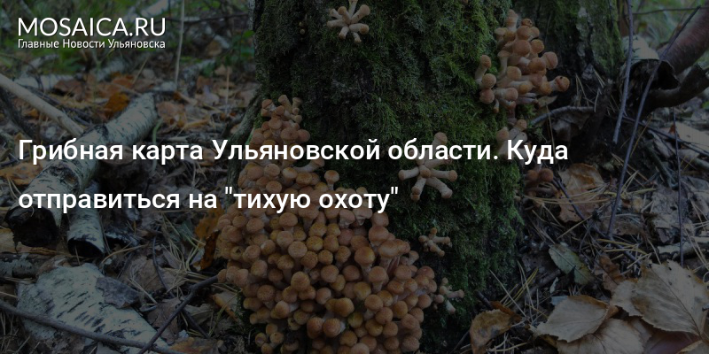 грибные места в ульяновской обл фото выглядит чесотка