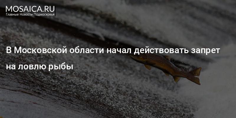 запрет на ловлю рыбы в 2018 году в московской области на пахре